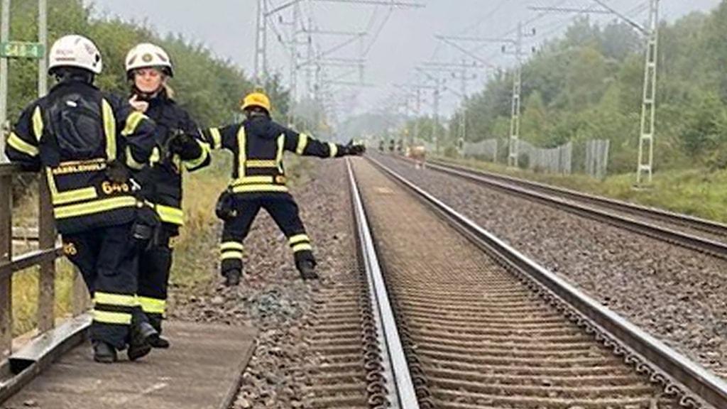 Tre brandmän i uniform försöker skrämma en ko