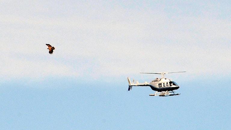Genrebild helikopter