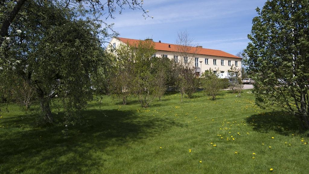 Hus i trädgård