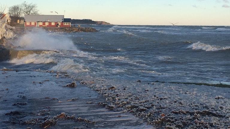 Vattnet längs kusten har sjunkit, men når fortfarande högt i blåsten. Foto: Malin Thelin/Sveriges Radio
