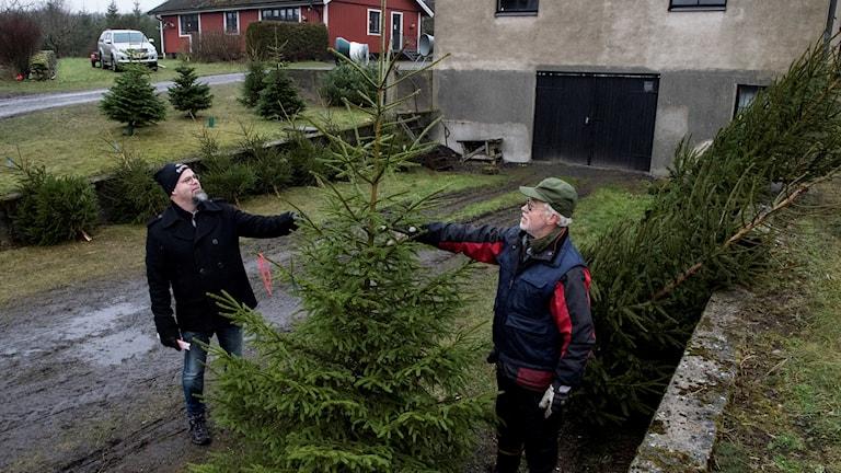Julgranar och två män