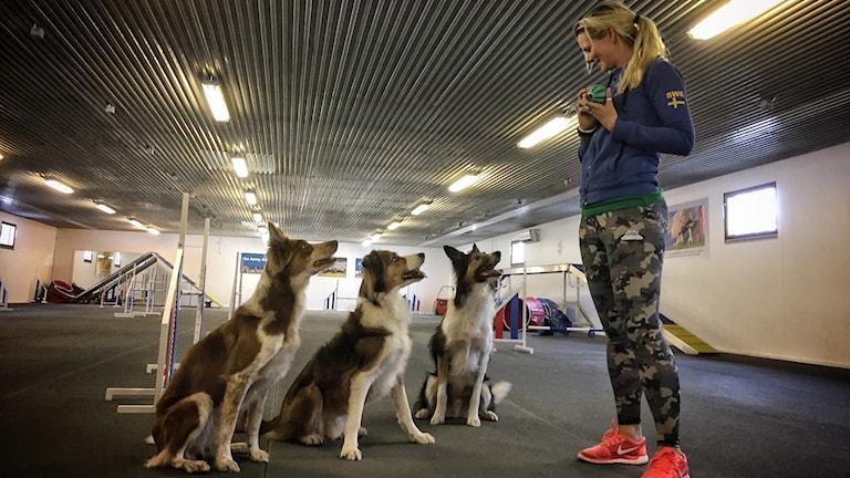 Jenny Damm tränar sina hundar Ziw, Ogin och Zaa