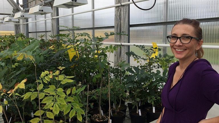 Michelle Cleary, forskare vid institutionen för sydsvensk skogsvetenskap i Alnarp.