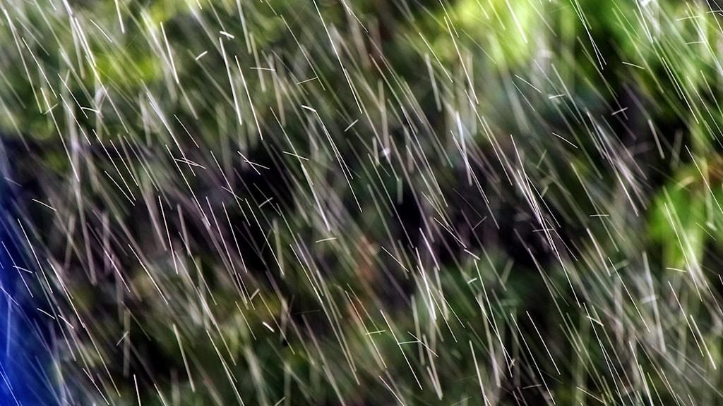 Regn i en somrig grönska