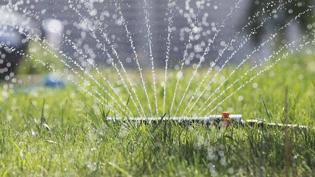 vattenspridare på grön gräsmatta