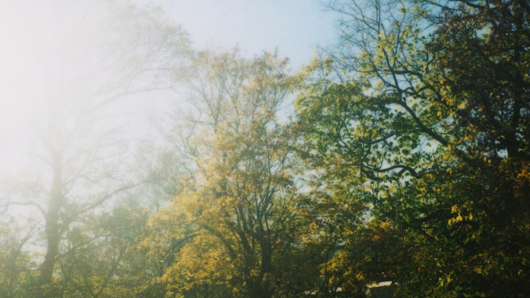 Träd och sol