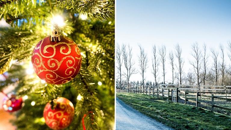 Två bilder: julgran med kulor och landsväg med grönt gräs
