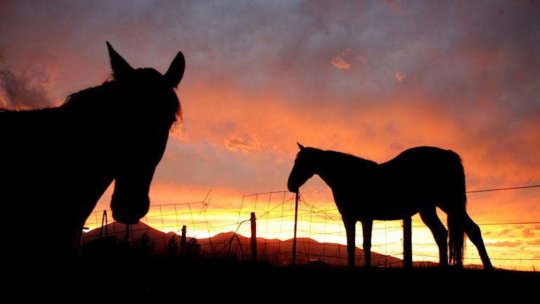 En hästgård i Ängelholms kommun har isolerats efter ett utbrott av kvarka.
