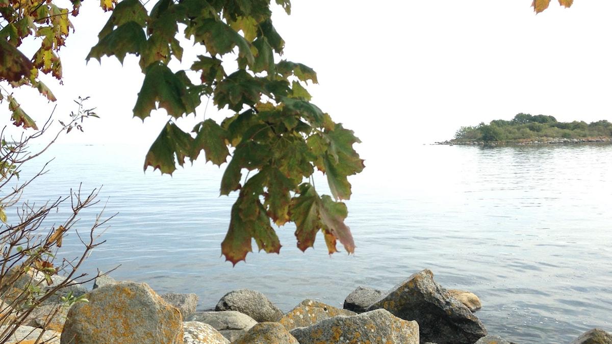 Problemen i Östersjön är gifter, övergödning och hårt fiske.
