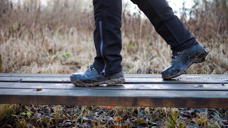En person går på en träspång. Foto: Robin Haldert/TT