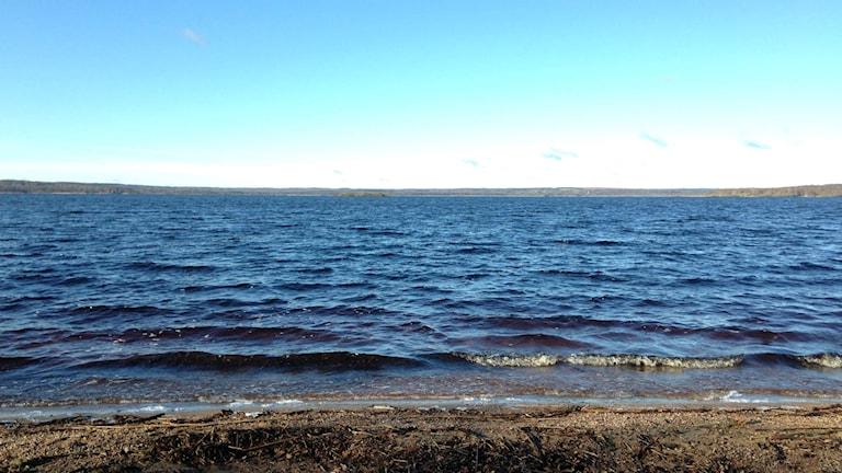 Finjasjön utanför Hässleholm har miljöproblem med alger och bakterier.