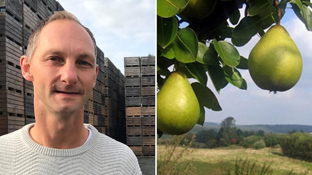 Till vänster Henrik Stridh, till höger ett päronträd i ett skånsk landskap.