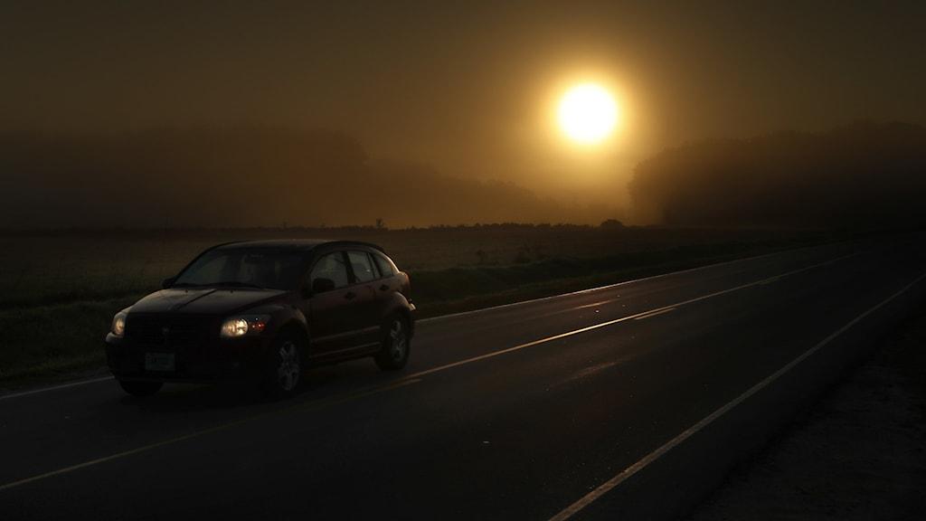 Morgonsol i dimma på en väg