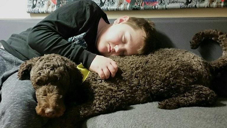 Hund och pojke i en soffa
