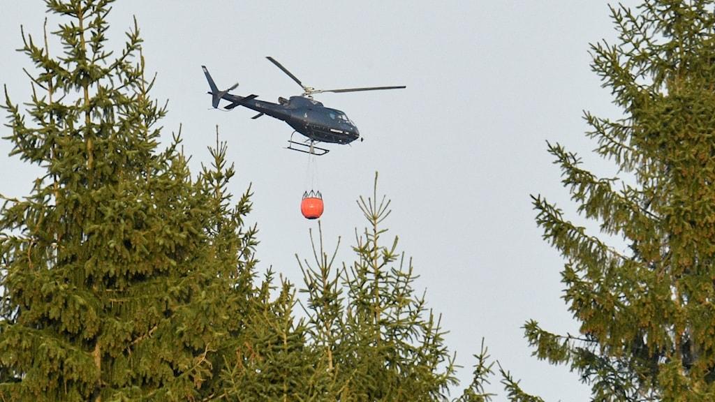 Helikopter som bekämpar skogsbrand i Hästveda-Osby.