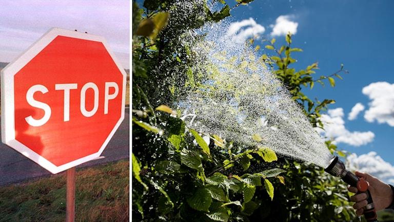 Bild på stoppskylt och en bild på en hand som vattnar en buske.