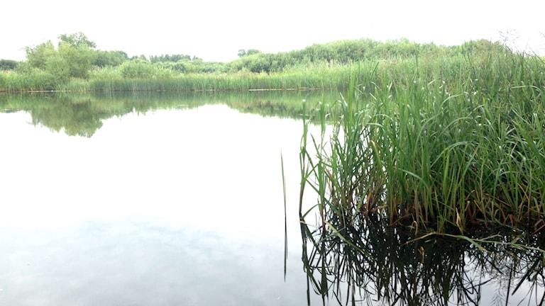Vattenriket i Kristianstad erbjuder livsutrymme för hotade djur och växter.