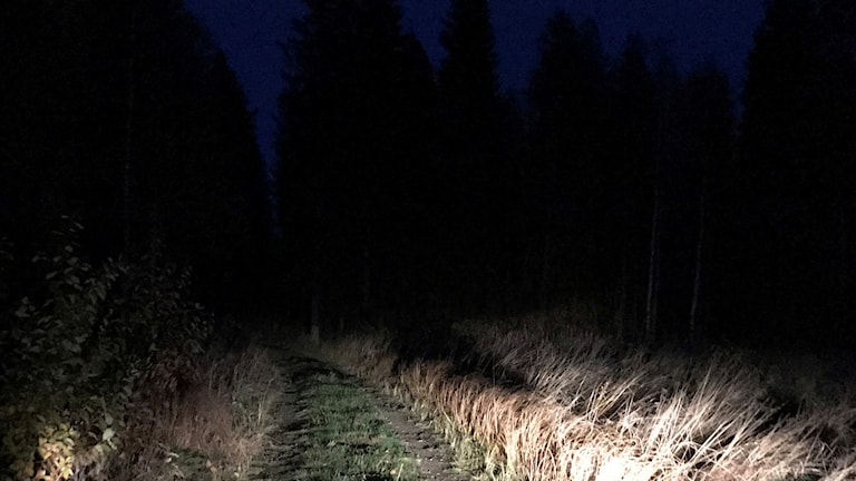 Nattorientering i Övertorneå