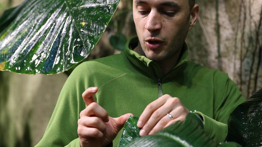man i grön tröja måttar med händerna i regnskogsmiljö