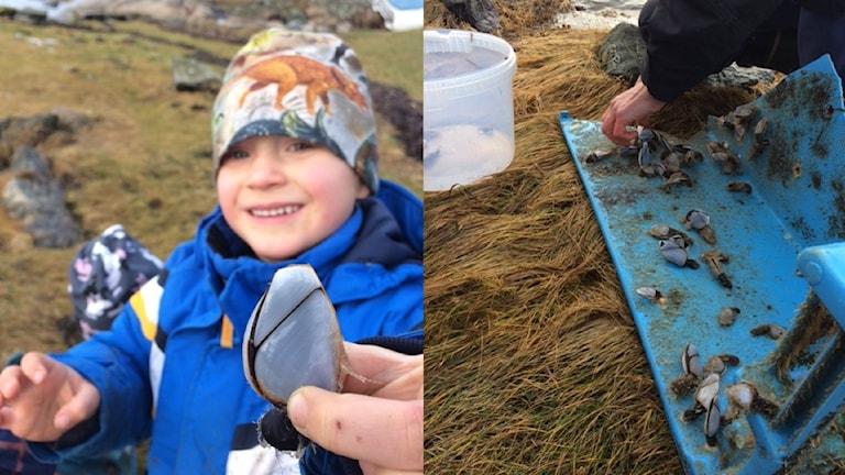 Ett collage med två bilder, på den vänstra ses en långhals i närbild och i bakgrunden en glad femåring, på den andra bilden ser man någon plocka långhalsar som sitter fast på en trasig ilandfluten plastlåda