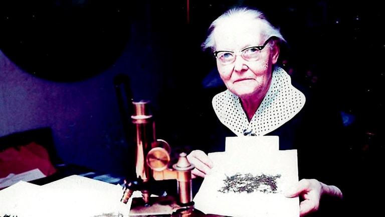 266 arter av bladmossor och 125 levermossor från Ljungbytrakten hittade vägen till Judith Christofferssons samling.