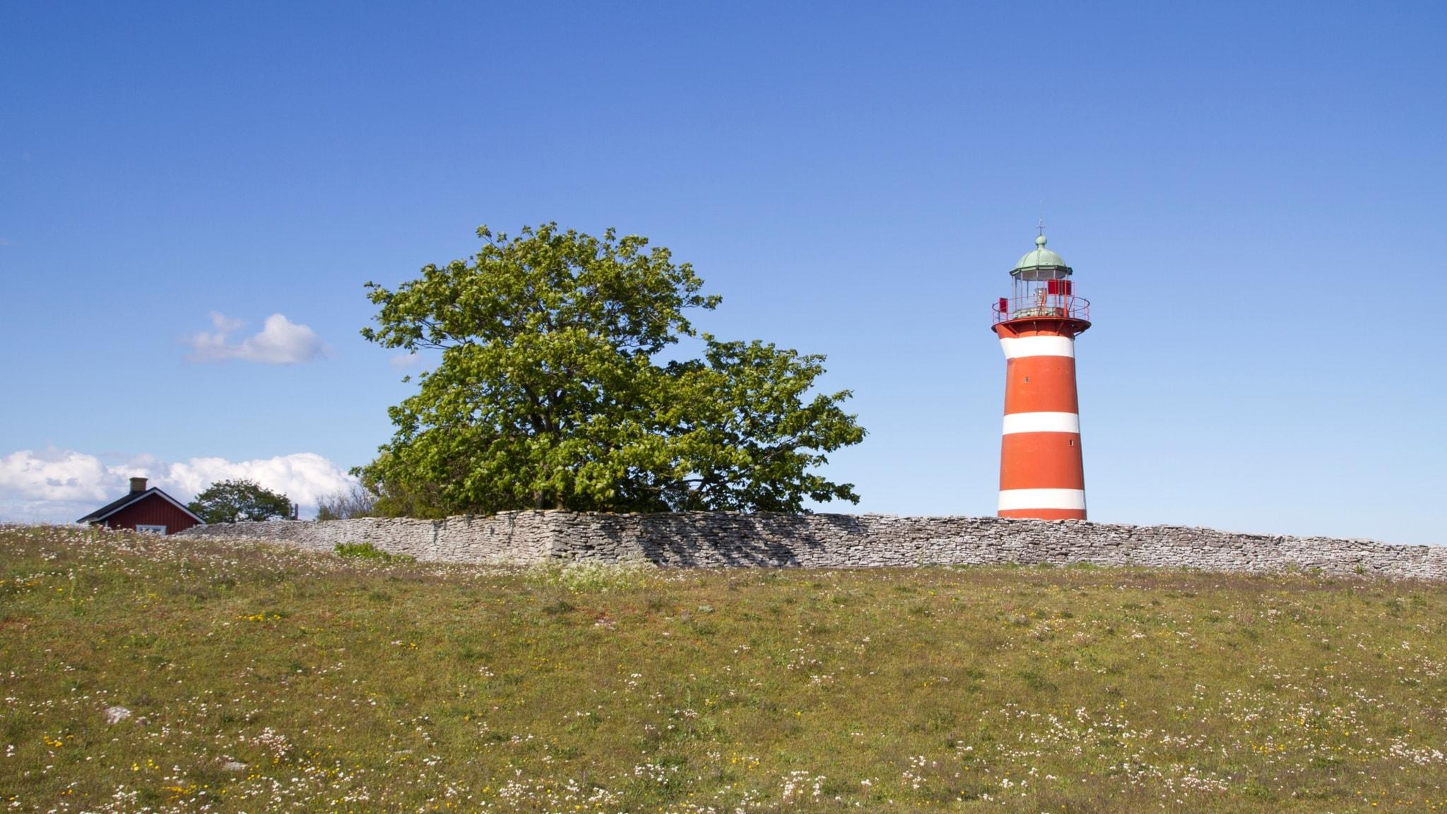 Fåglarnas Gotland