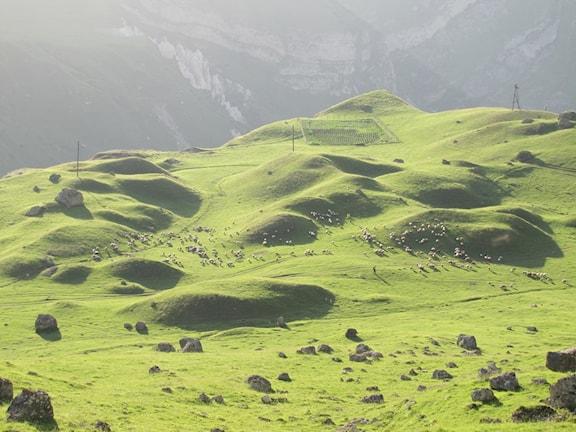 Kaukasus - fårbetat