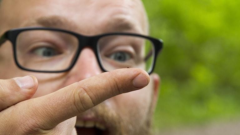 En närbild på en man som mycket engagerat tittar på en mycket liten brun skalbagge på en fingertopp.