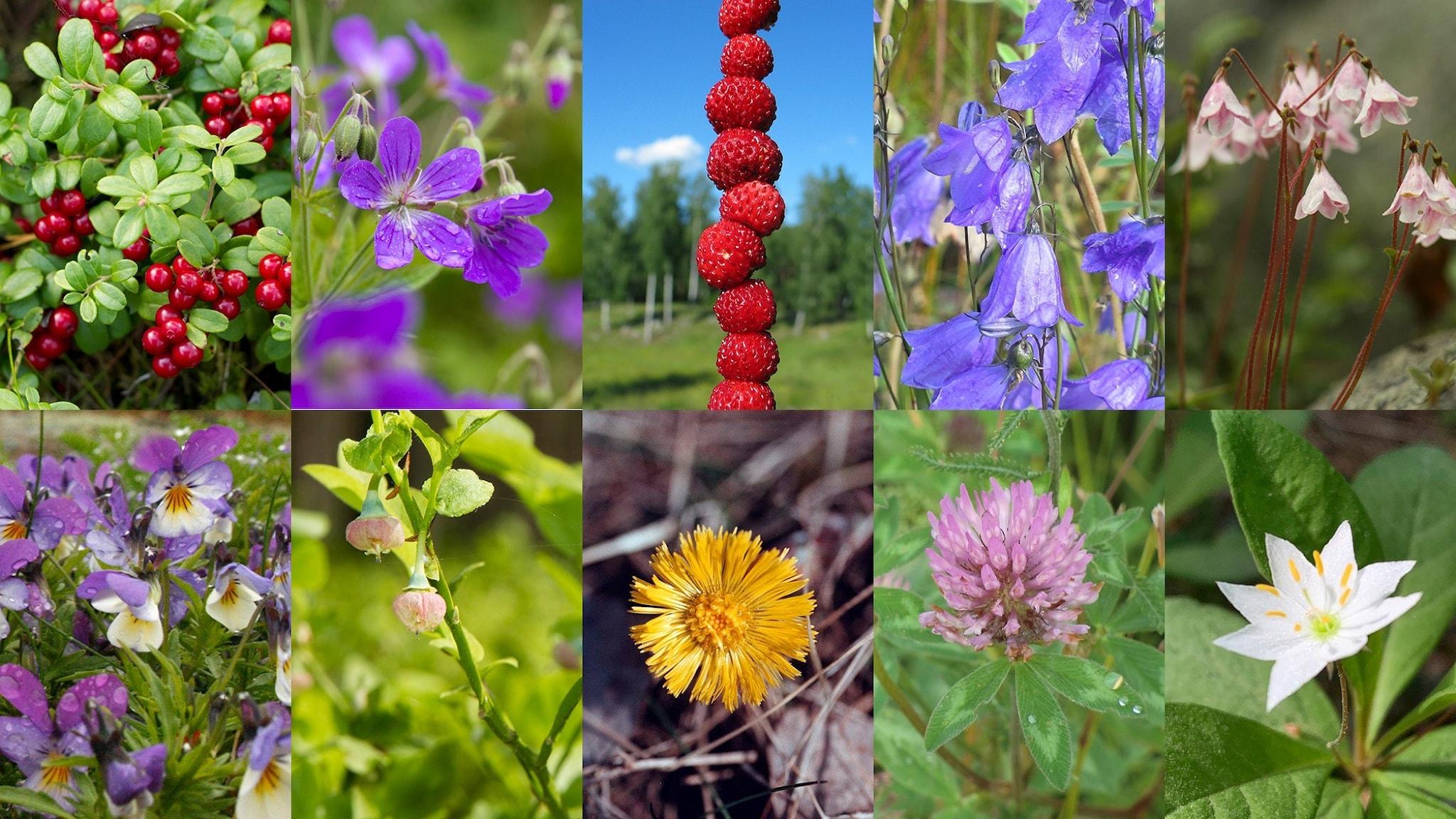 Collage med tio artbilder på blommor