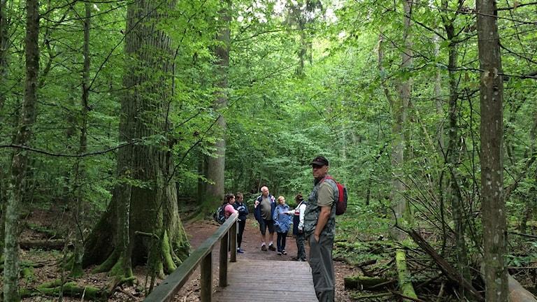 Jätteek i skogen med några turister bredvid.