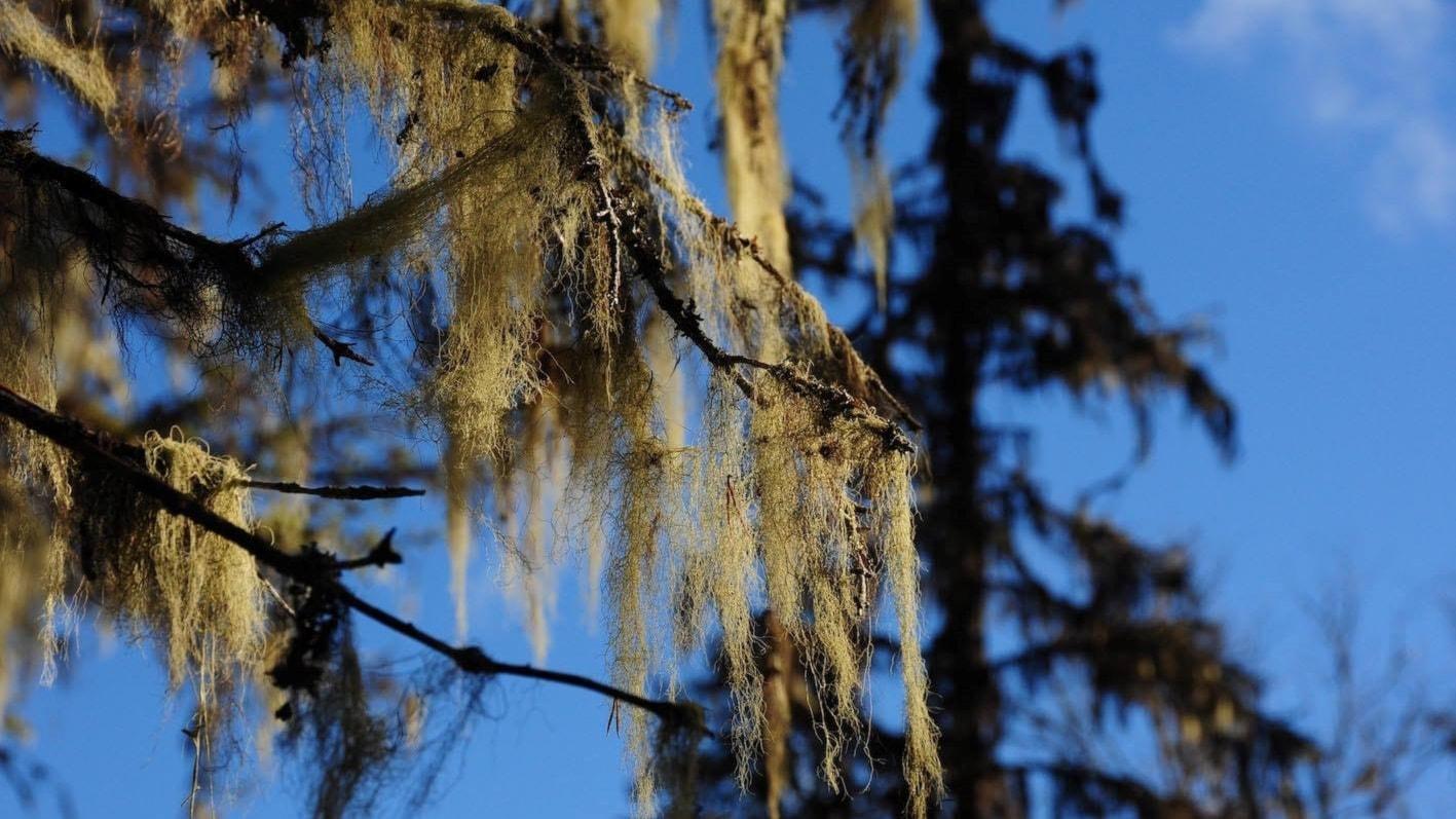 Lavarnas mysterium och fågelpoesi