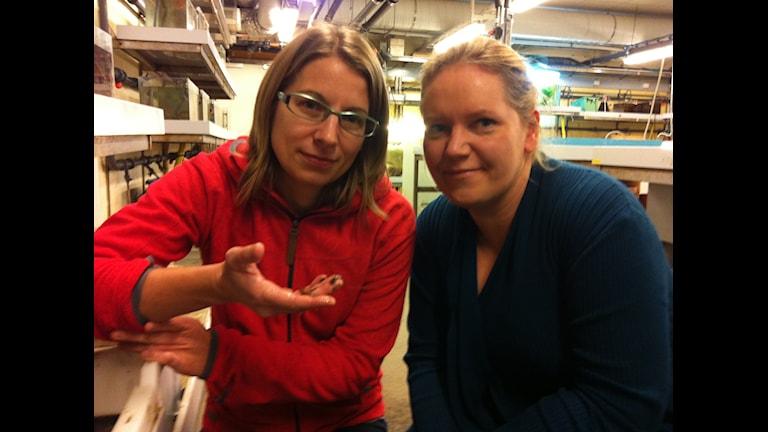 Jenny Lindström och Lena Friis Möller forskar på marina djur som kan lysa. Foto: Anneli Megner Arn.
