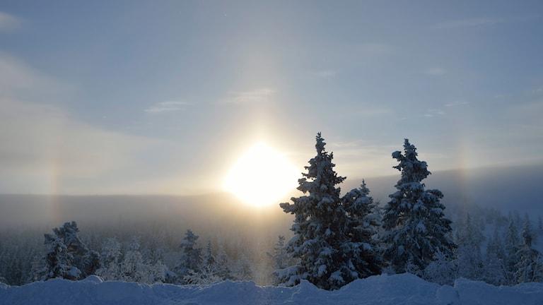 Just nu vilar stor del av naturen i Sverige i ett snölandskap. Foto: Henrik Montgomery/TT