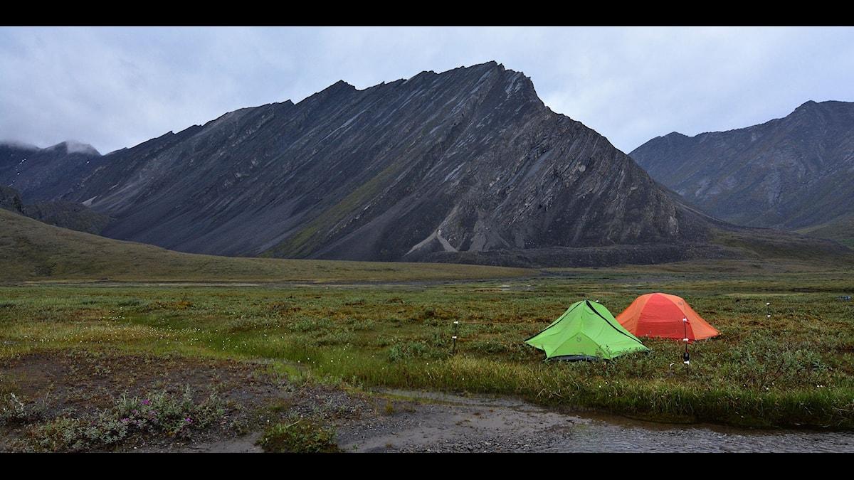 Med bara en tältduk mellan sig och naturen. Foto: wikimedia commons