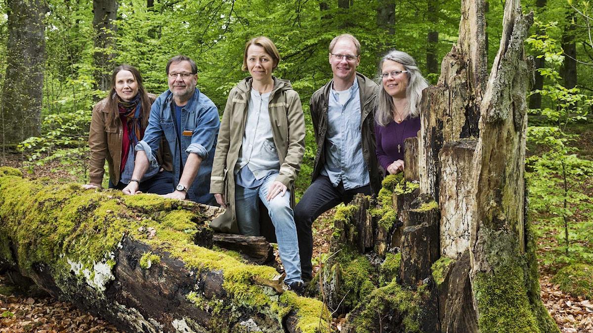 Naturmorgon. Helena Söderlundh, Lasse Willén, Jenny Berntson Djurvall, Joacim Lindwall, Lisa Henkow. Foto: Mattias Ahlm/Sveriges Radio