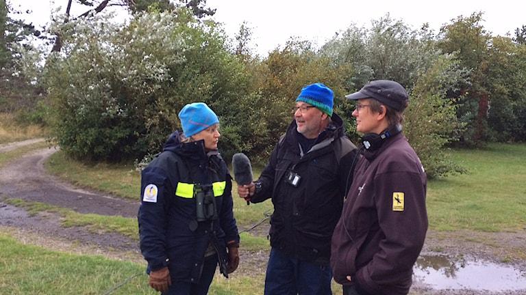 Susanne Åkesson, Lasse Willen och Sophie Enbom i Falsterbo fyrträdgård. Foto: Ulf Myrestam/Sveriges Radio.