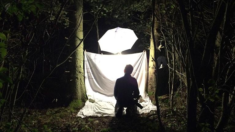 Med en stark lampa och ett lakan lockar Tobias Ivarsson till sig nattinsekter i skogsbrynet. Foto Lisa Henkow / Sveriges Radio.