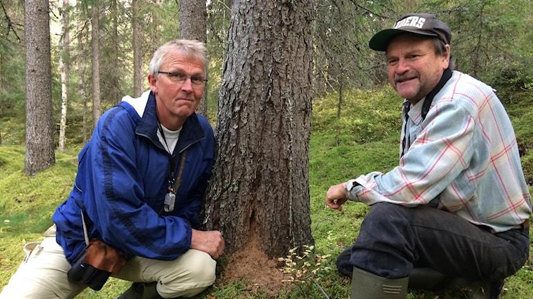 Bengt Oldhammer och Rolf Lundqvist i Lungsjöområdet i Dalarna. Foto: Joacim Lindwall/Sveriges Radio