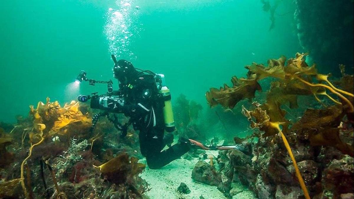 Intresset är stort för att filma naturen. Som här, under vattenytan. Foto: Tony Meyer/TakeYourShoesOff