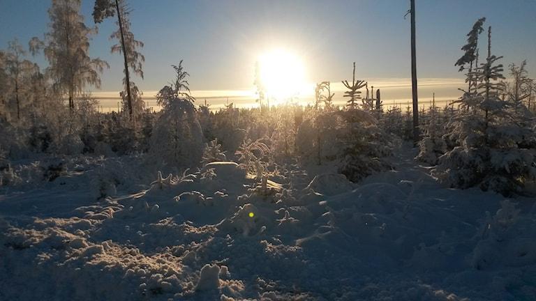 Även södra Sverige fick vinter i januari. Här en bild från ett vintrigt Gånghester. Lyssnarfoto: Jonas Andersson.