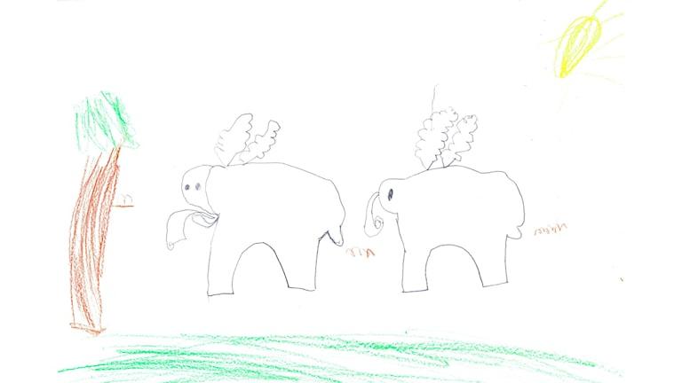 Barnen på avdelningen Hattstugan på Soldatängens förskola i Sävedalen hörde av sig med en fråga om elefanter till Naturmorgon. Barnen har ritat teckningar på temat.