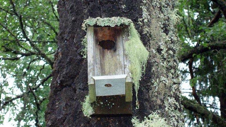 Fin gammal fågelholk som gjort stor nytta för fågellivet under många år.