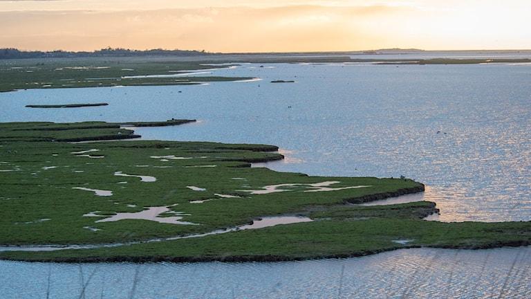 En grön gräsplätt med inslag av sötvatten i solnedgången.  Några fåglar syns.