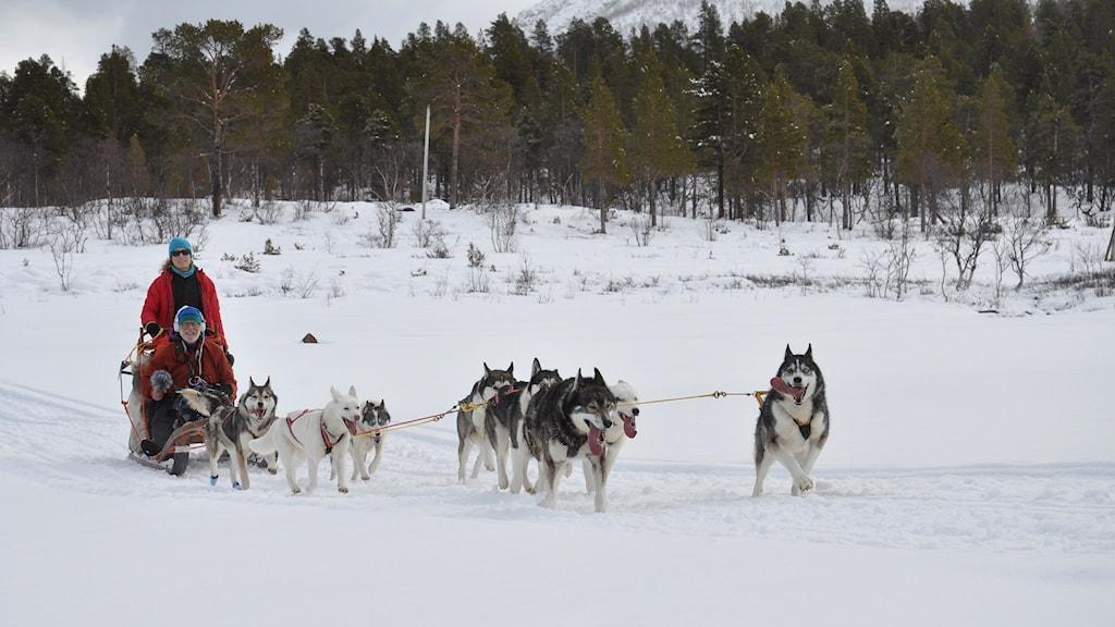 Thomas Öberg intervjuar hundföraren Stina Svensson.