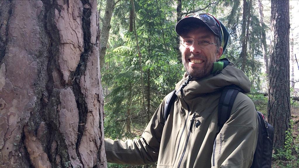 Marcus Hedblom, ekolog vid SLU i Uppsala, forskar om hur människan påverkas av naturen och fågelsång. Vid en stor tall i Stadsskogen i Uppsala.