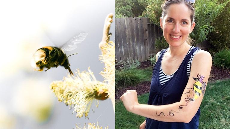 Ett collage med två bilder, till vänster en flygande humledrottning som besöker en sälgblomma, till höger en kvinna med en målning av en humledrottning på armen.