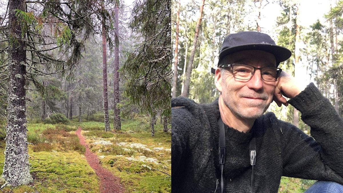 Ett collage med två bilder, till vänster en stig i en granskog, till höger en man i grön tröja och keps som tittar in i kameran.