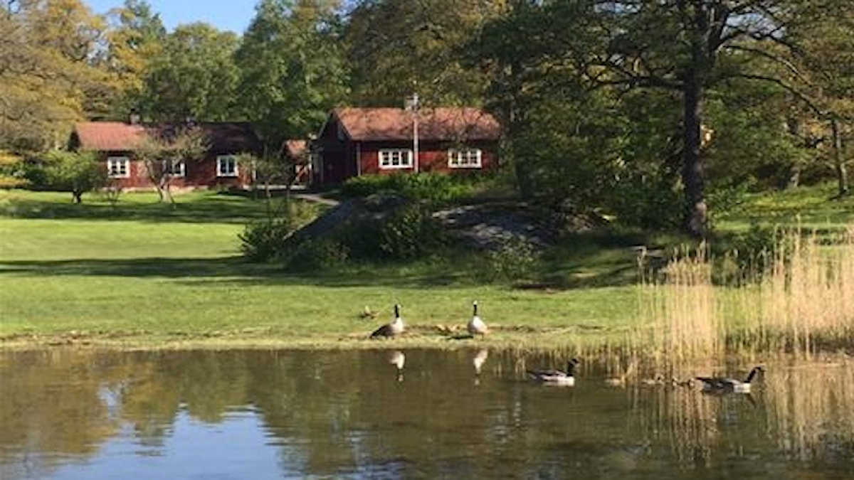 Två röda stugor på Sävö, en ö i Sörmlands skärgård.
