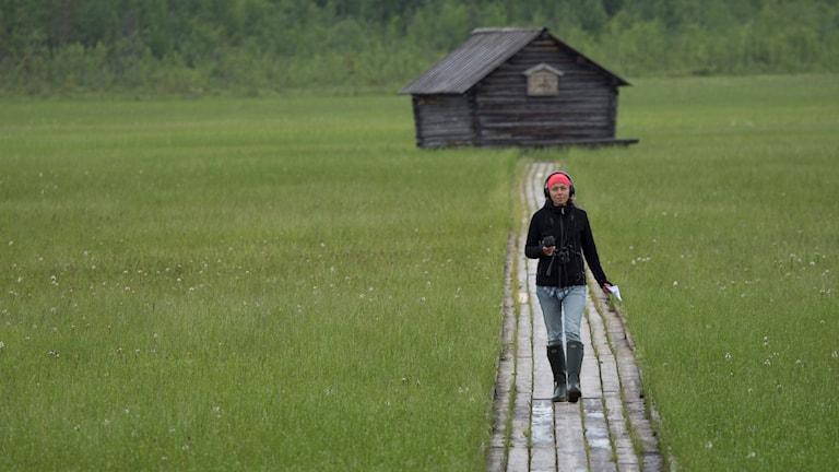 Jenny Berntson Djurvall på slåttermyren Vasikkavuoma i Tornedalen.