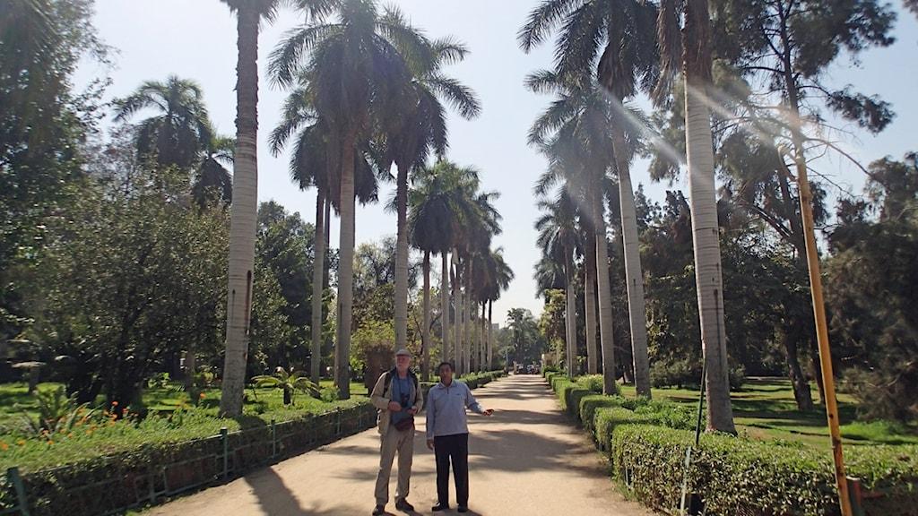 Hjalmar Dahm och Ehud Wadi i Orman Garden, där herbariet som Vivi Täckholm byggde upp finns kvar.